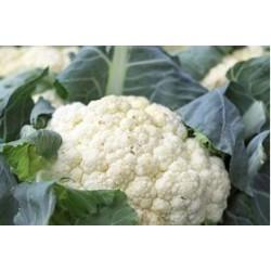 Jesi white cauliflower seeds