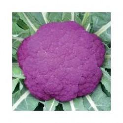 Sicily purple cauliflower seeds