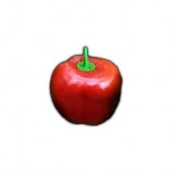 Rocoto Red secco