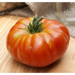 """""""Sarom"""" Pantano tomato seeds"""