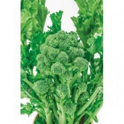"""Aprilatica"" turnip green seeds"