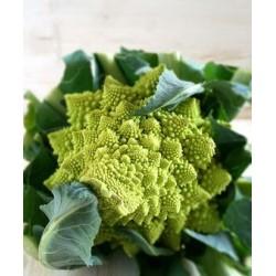 Roman broccoli seeds from S. Giuseppe (Lazio)