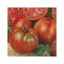 Pomored round dwarf tomato seeds