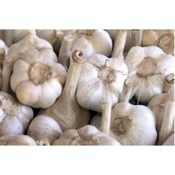 Semi aglione Valdichiana bianco