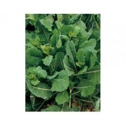 """""""Getti e foglie"""" broccoletto seeds"""