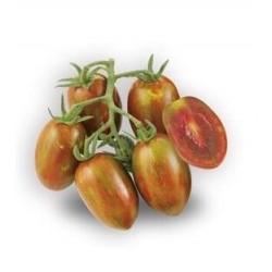 Semi di pomodoro Crispino Plump Nero