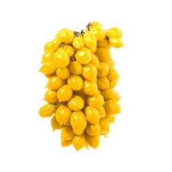 Semi di pomodoro piennolo vesuviano giallo
