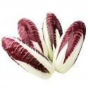 Radicchio seeds